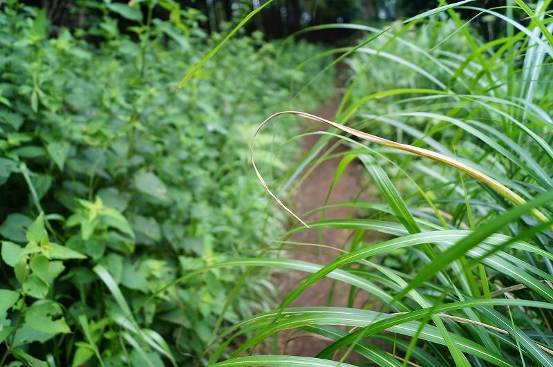f:id:outdoor-kanazawa:20150809201845j:plain