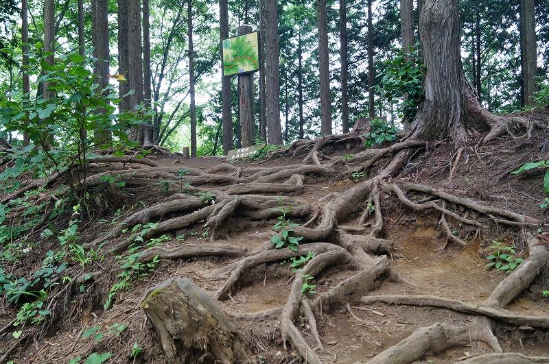 f:id:outdoor-kanazawa:20150809202340j:plain