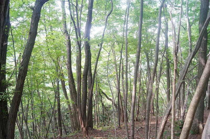 f:id:outdoor-kanazawa:20150809204055j:plain