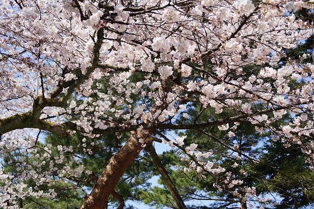 f:id:outdoor-kanazawa:20160403095126j:plain