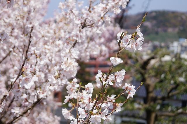 f:id:outdoor-kanazawa:20160403101910j:plain