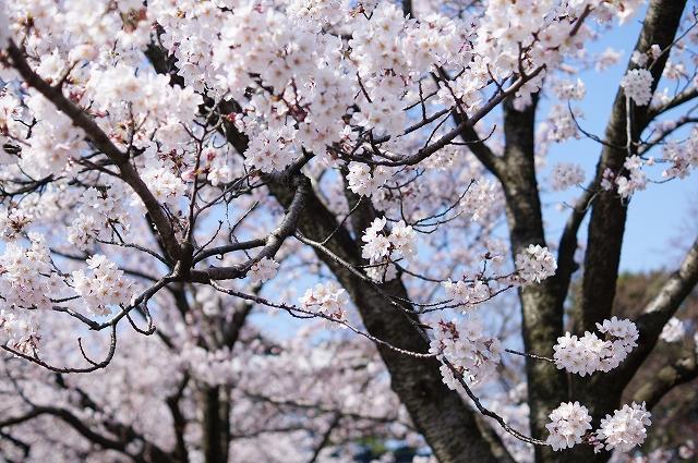 f:id:outdoor-kanazawa:20160403102500j:plain
