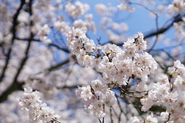 f:id:outdoor-kanazawa:20160403102520j:plain