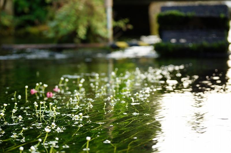 f:id:outdoor-kanazawa:20160816005646j:plain