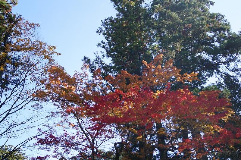 f:id:outdoor-kanazawa:20161116113035j:plain