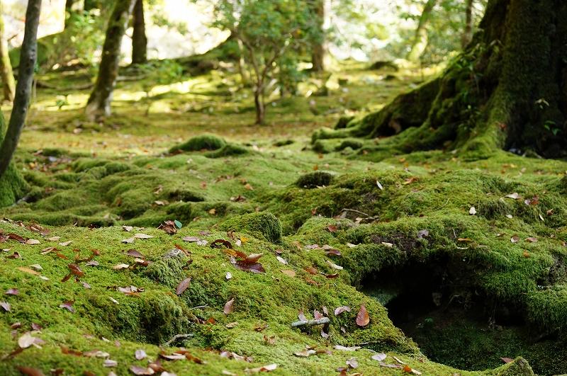 f:id:outdoor-kanazawa:20161119150854j:plain