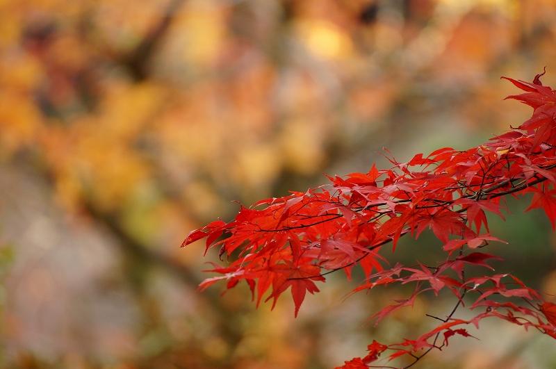 f:id:outdoor-kanazawa:20161119155948j:plain