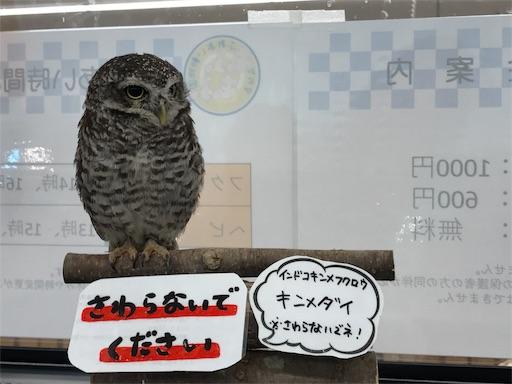f:id:outdoor-kanazawa:20170608154828j:image