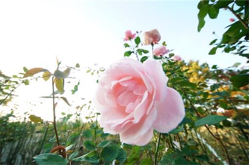 f:id:outdoor-kanazawa:20171105150658j:image