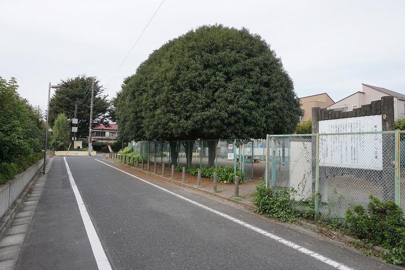クラブ テニス 善福寺 公園 カカポ置いてみた〜善福寺公園テニスクラブ〜