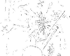 f:id:owadaraita:20170710123552p:plain