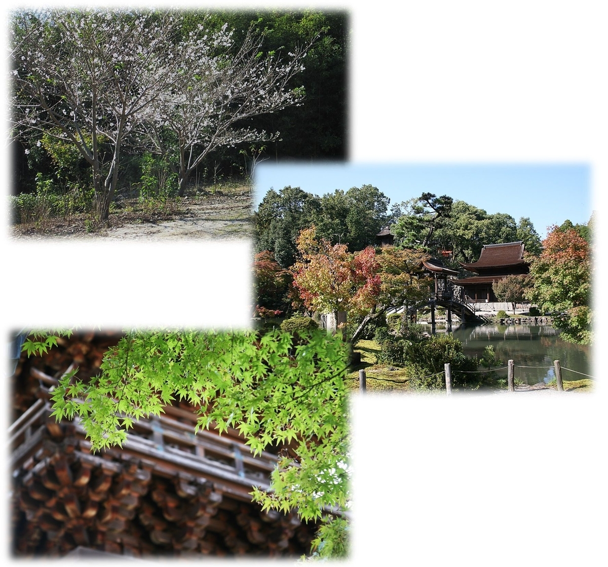 f:id:owari-nagoya55:20191102150823j:plain