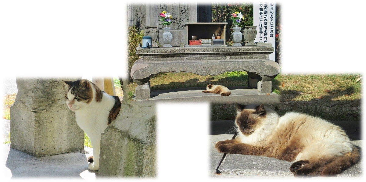 f:id:owari-nagoya55:20191208182438j:plain