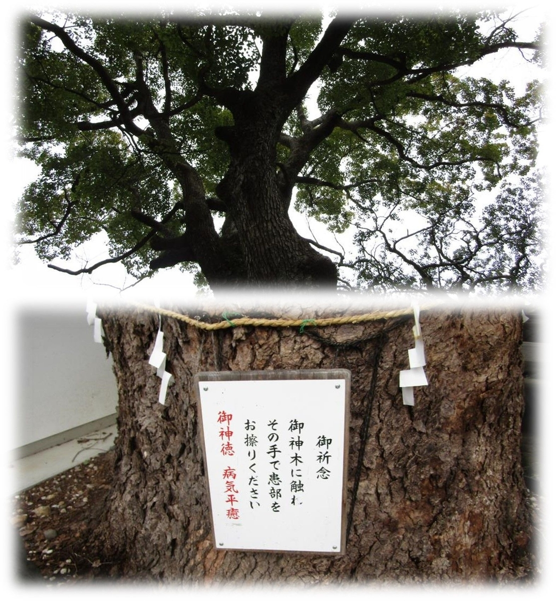 f:id:owari-nagoya55:20200316215953j:plain