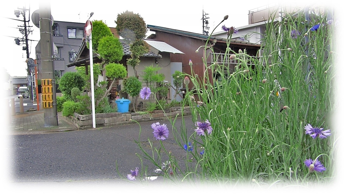 f:id:owari-nagoya55:20210422095753j:plain