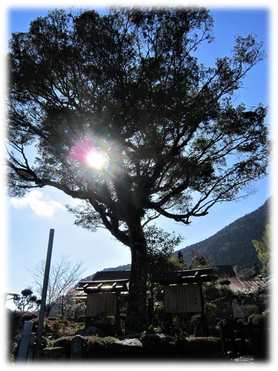 f:id:owari-nagoya55:20210507224632j:plain