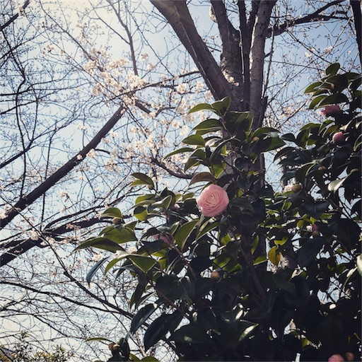 f:id:owl-ayano:20180325211100j:image