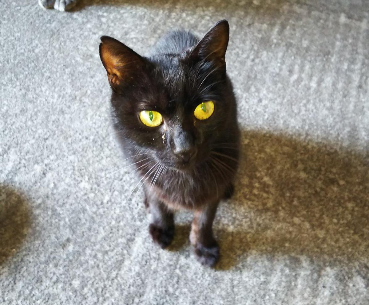 猫 黒猫 くろみ