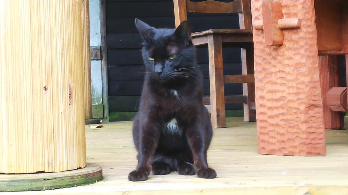 猫 黒猫 ツキノワ