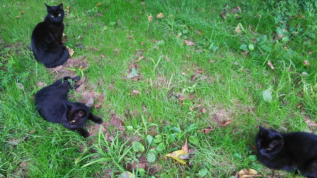 猫 黒猫 黒い三連星