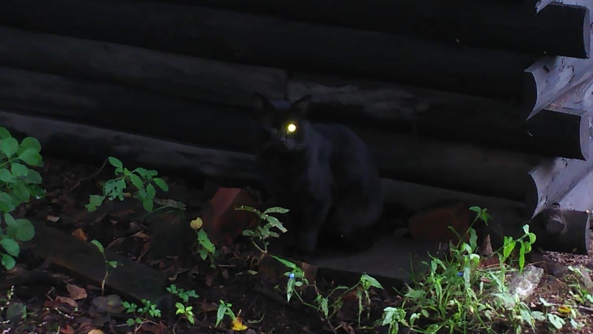 猫 黒猫 ボス猫 政宗