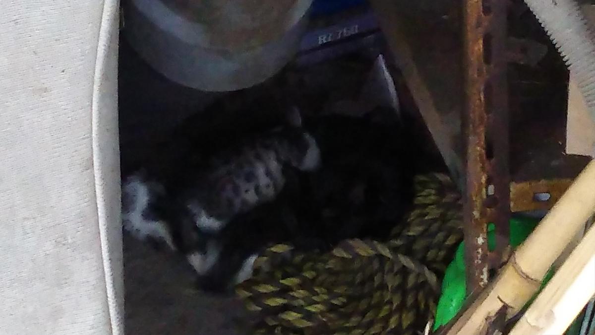 母猫 子猫