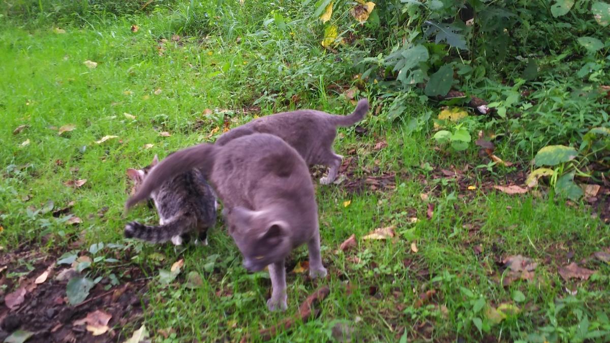 灰猫 大人しい