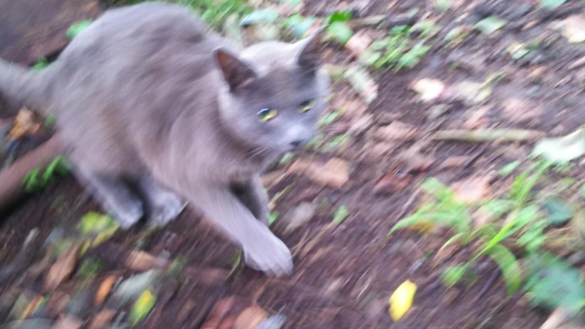 灰猫 怖がり
