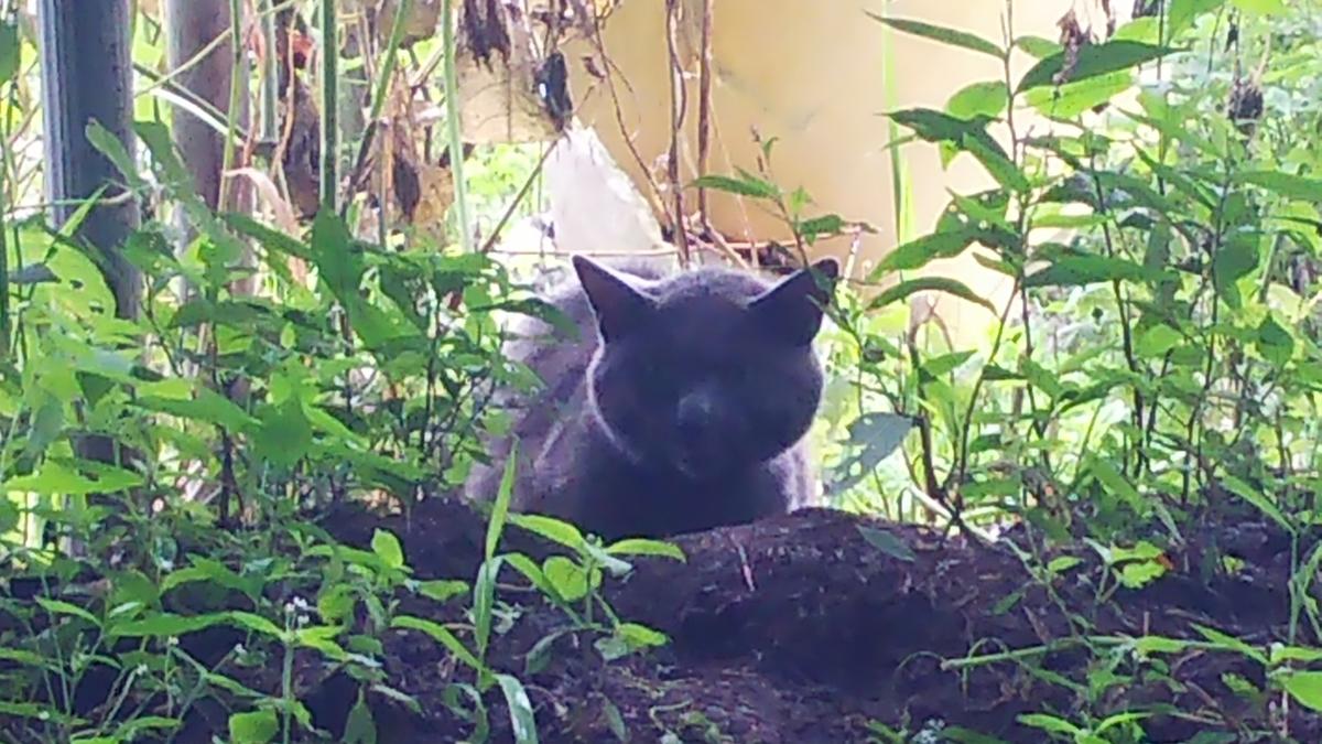 猫 ビビり