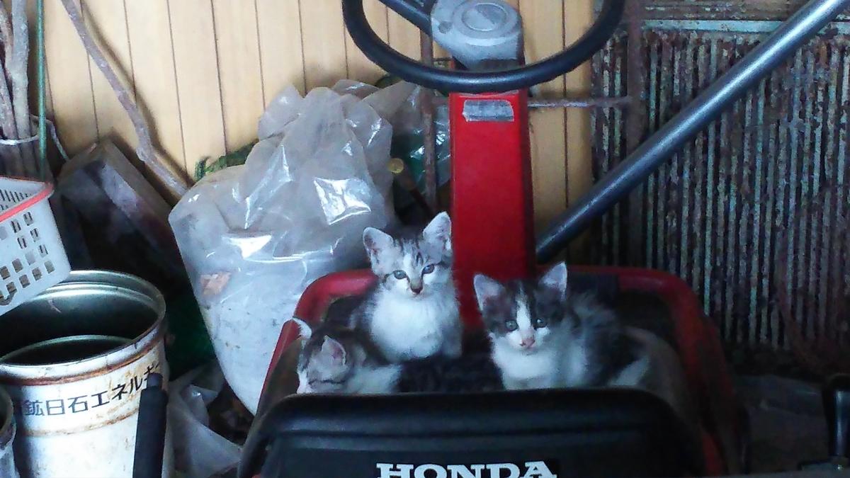 子猫 三匹