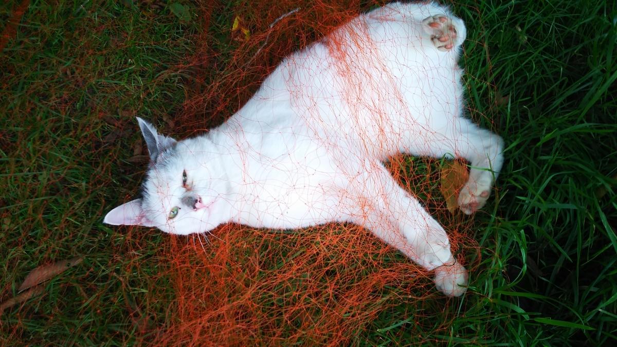 猫 網 じゃれる