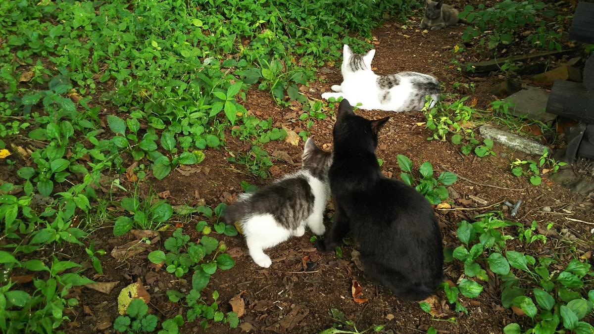 猫 母猫 子猫
