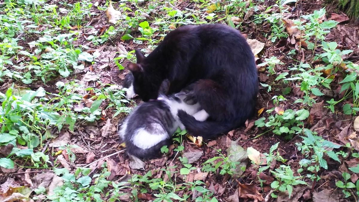 母猫 子育て