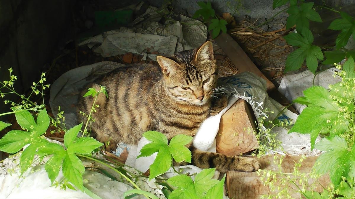 猫 台風 その後