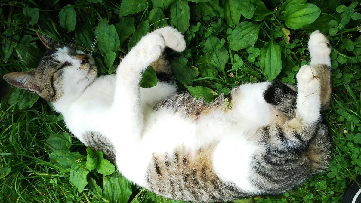 猫 ぷにみ 台風一過
