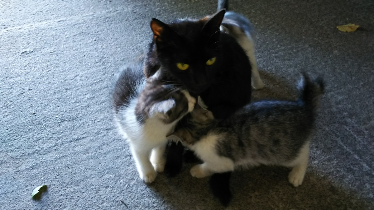 黒猫と子猫