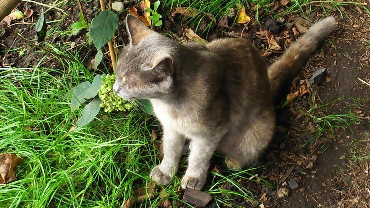 猫 灰さび なるみ