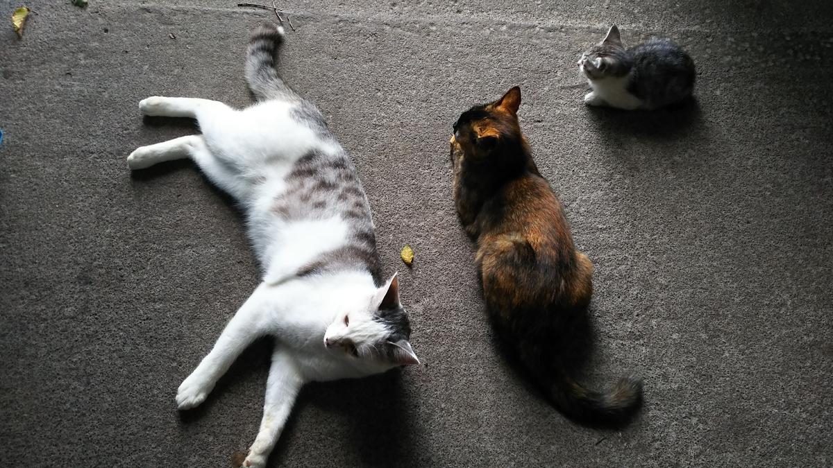 猫 仲良し