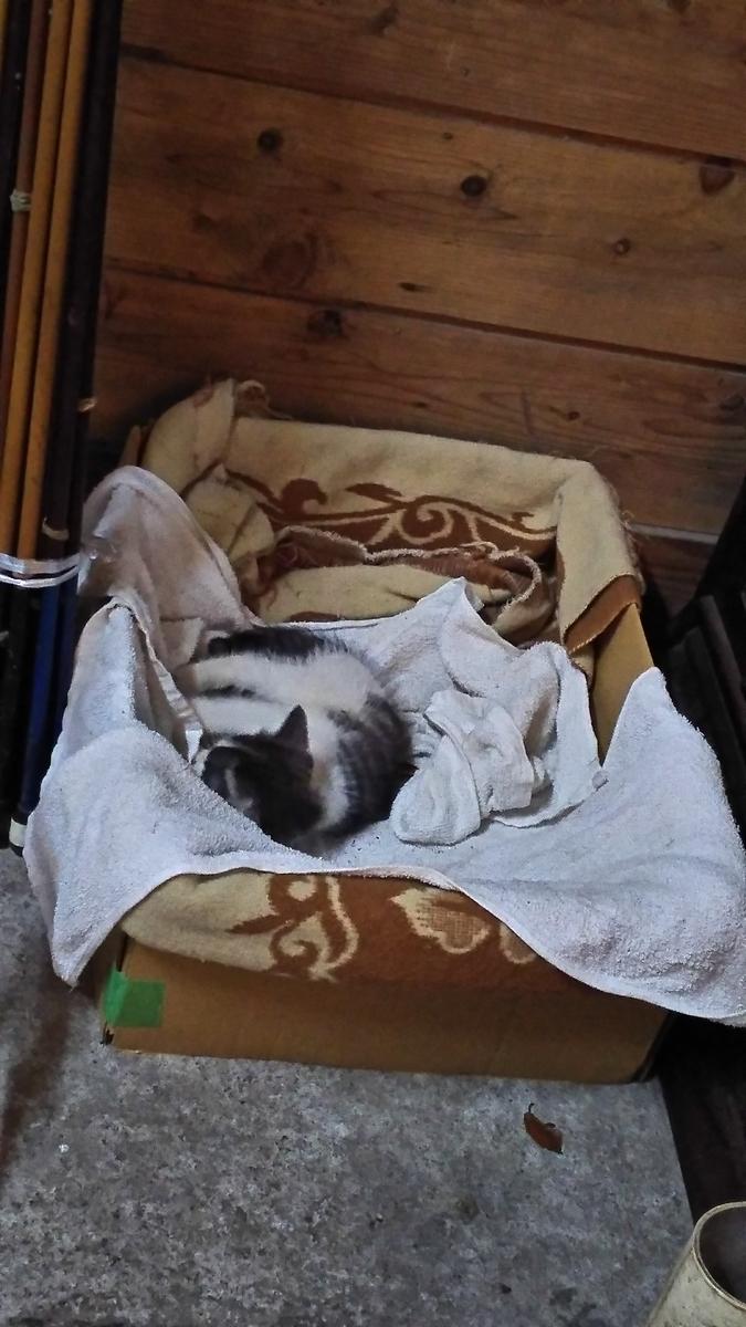 子猫 寝てる