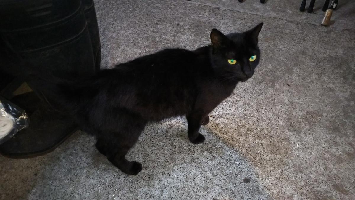 母猫 黒猫 くろみ