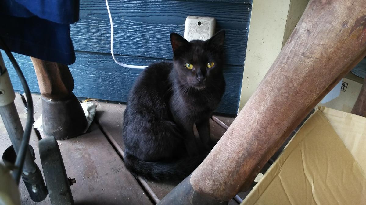 黒猫 野良猫