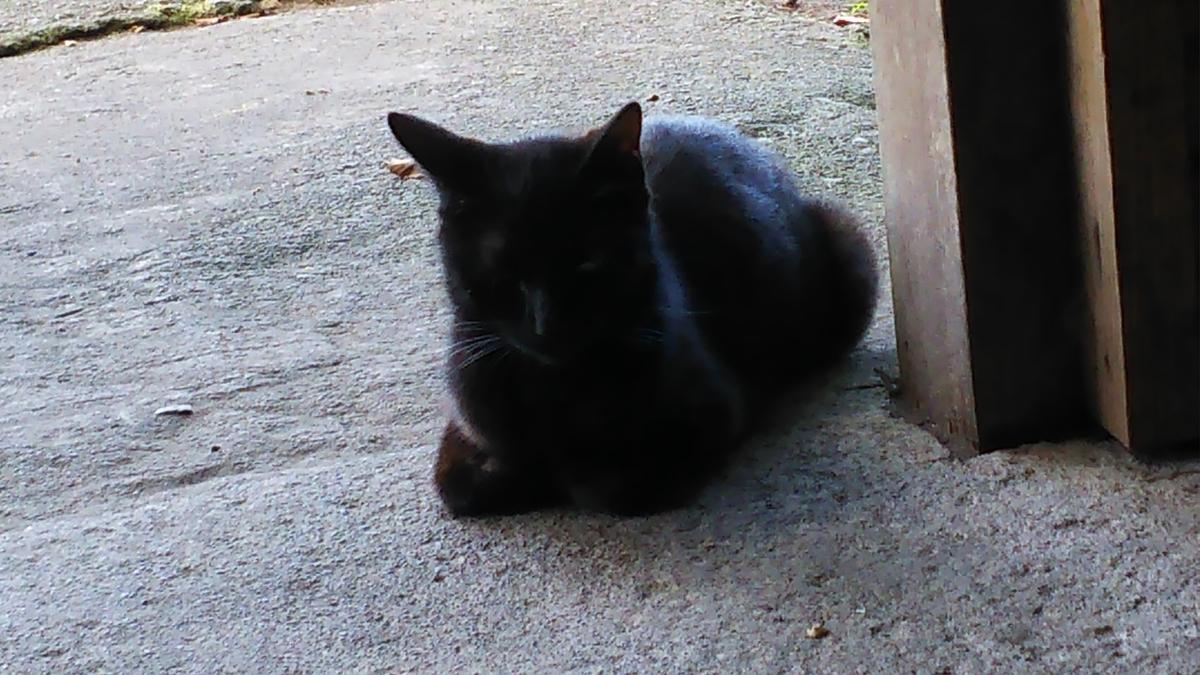 香箱座り 黒猫