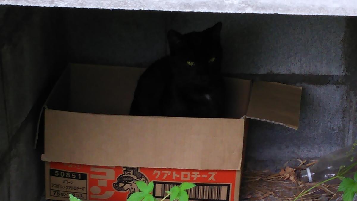 黒猫 段ボール