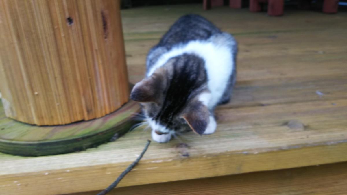 猫 木の棒 じゃれる