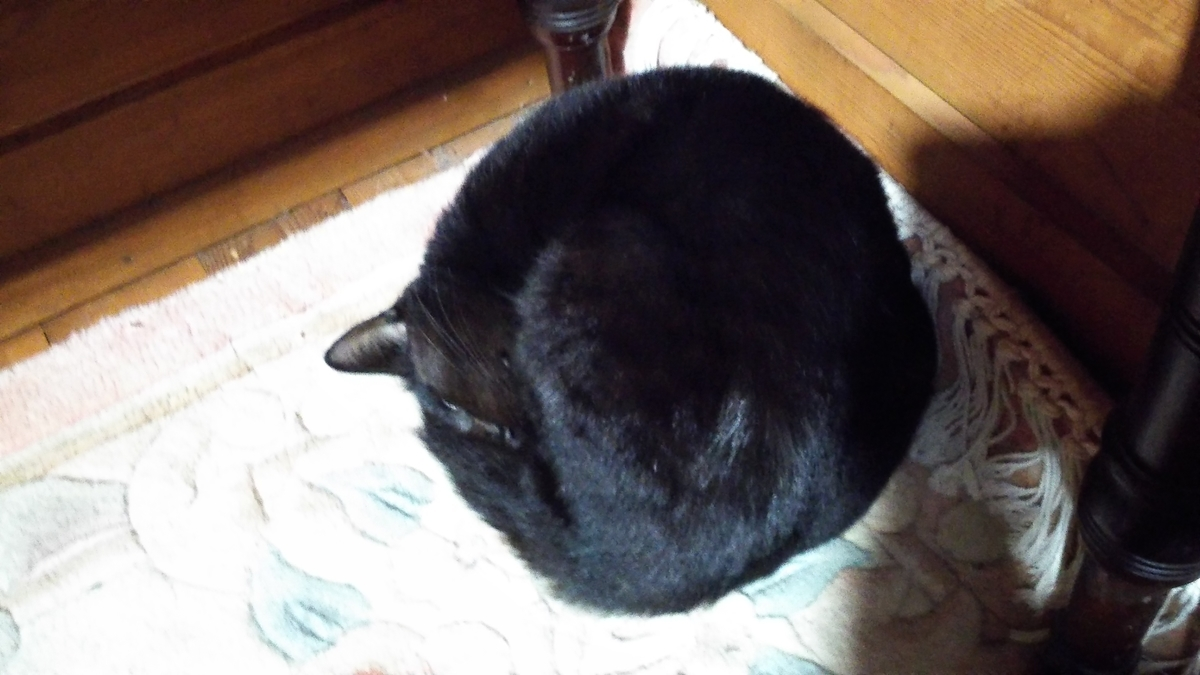 黒い塊 黒猫 謎