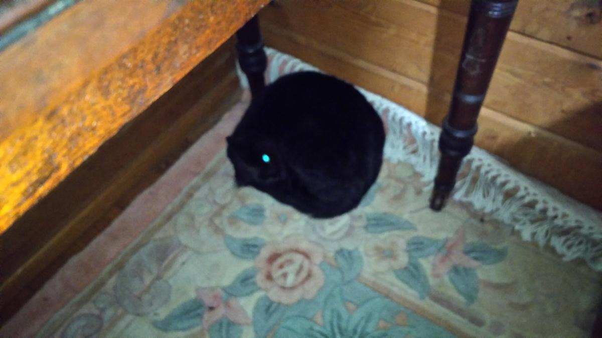 黒毛玉 黒猫