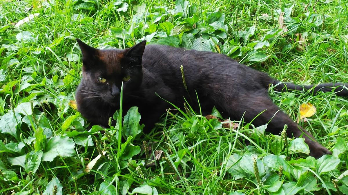 黒猫 野良 黒モフィー