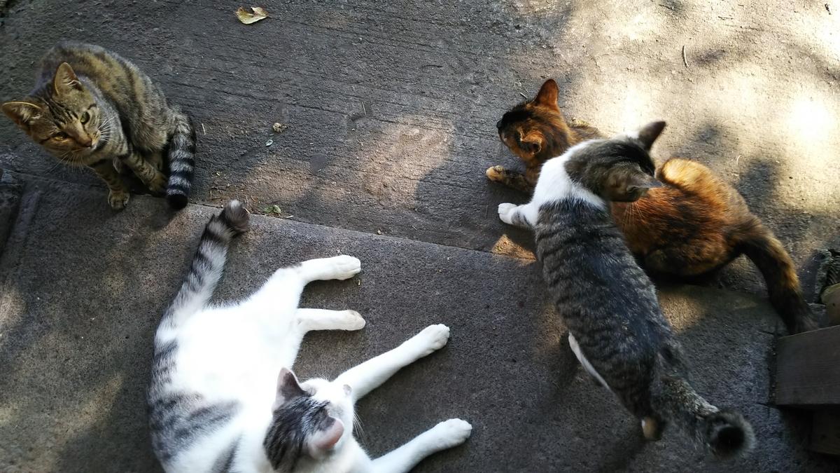 猫 仲良し 一派