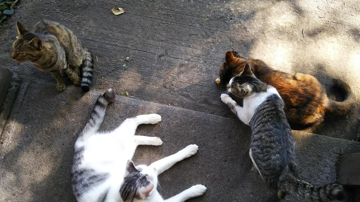 猫 甘える 一派
