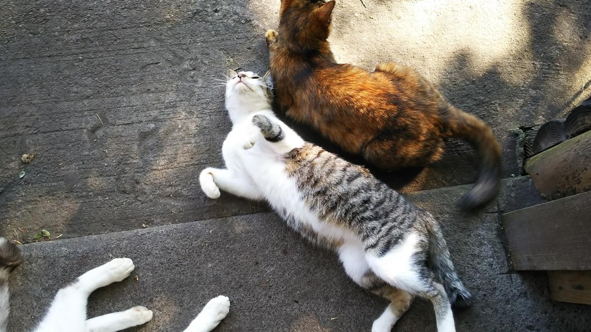 猫 かわいい スリスリ